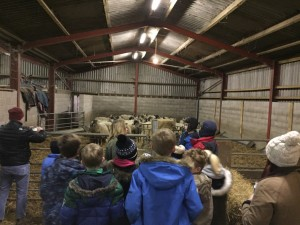 Cubs watching the lambing